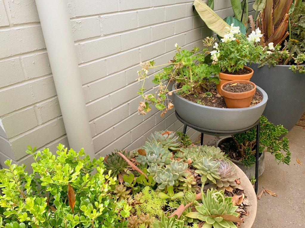 edmonds & greer oatley cafe brunch plants garden