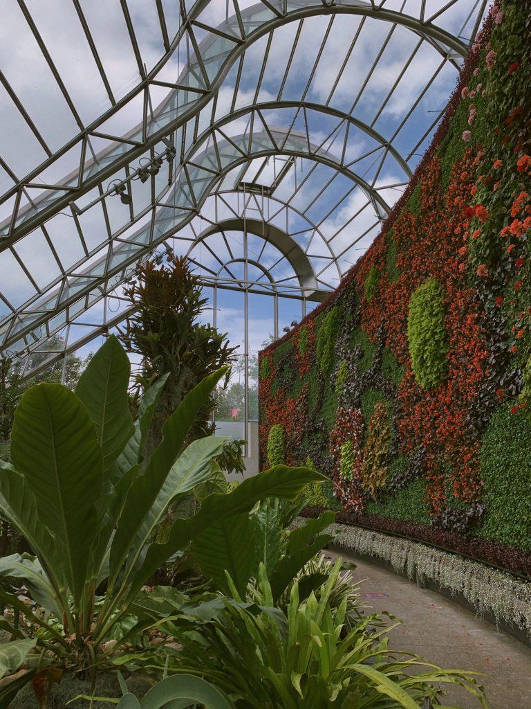 nature sydney plants outdoor royal botanic gardens