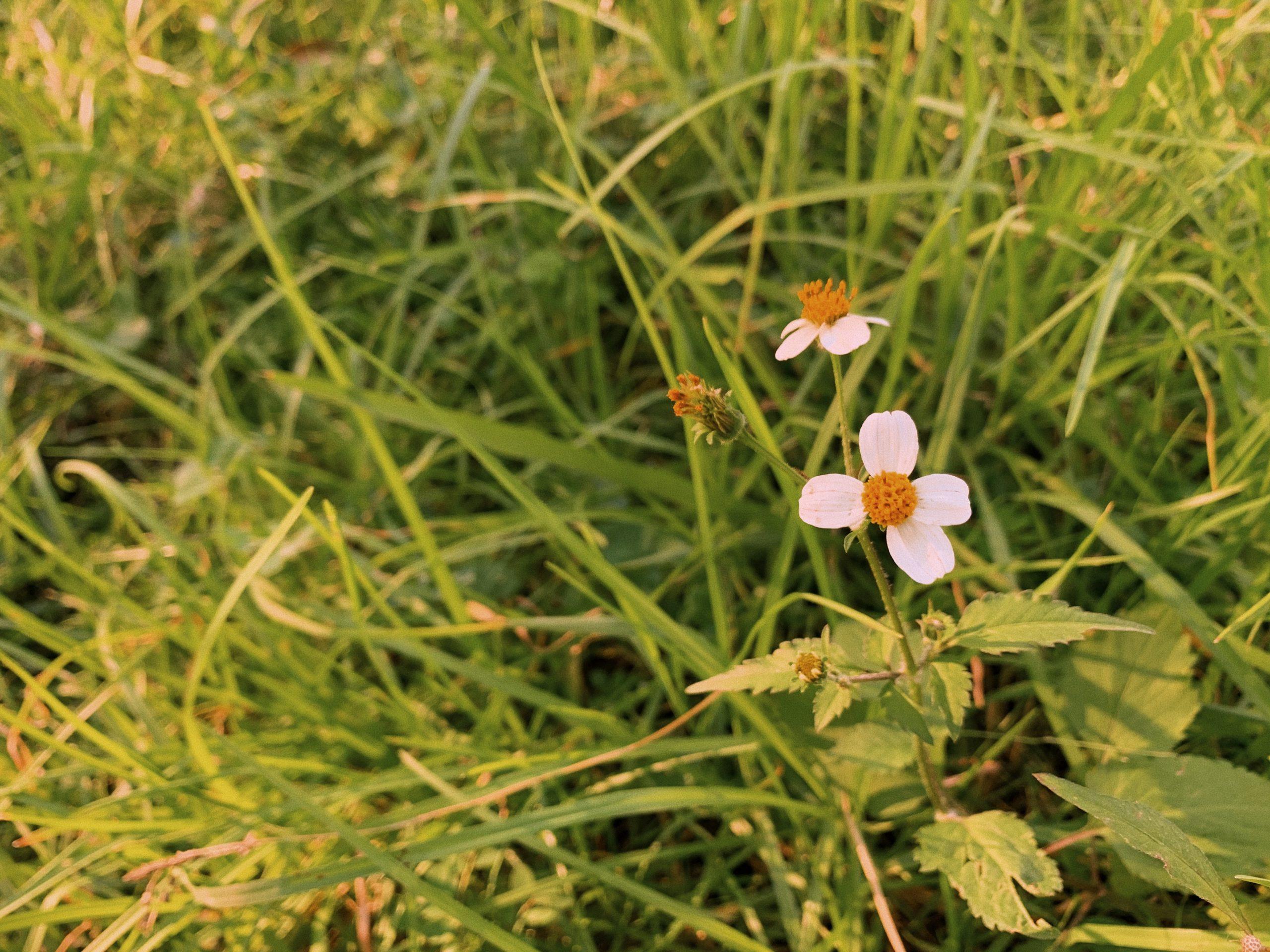 walking nature flowers
